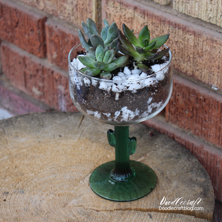 Succulents In A Cactus Glass