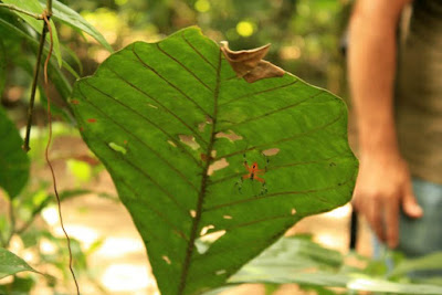 Sendero de selva tropical en Tortuguero