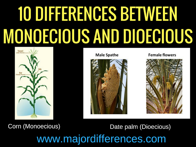 Differences between Monoecious and Dioecious