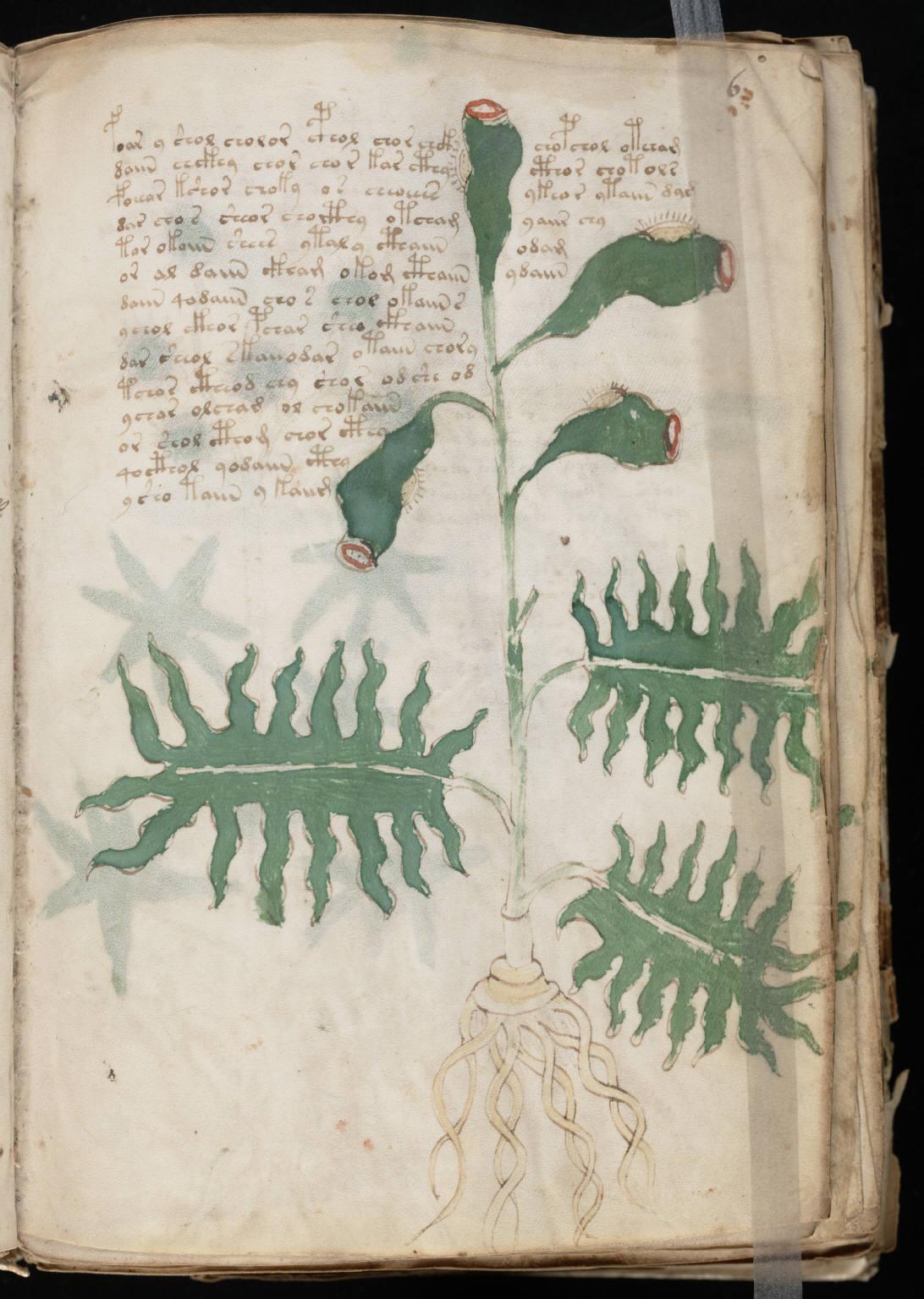 manuscrito013