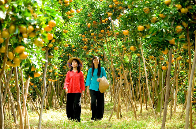 Vườn trái cây Cái Mơn, Bến Tre