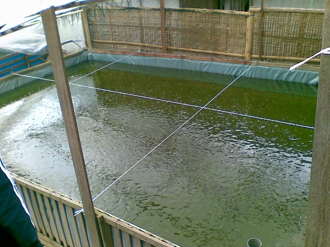 terpal kolam