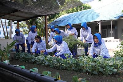 Jalasenastri Cabang 2 Korcab VII DJA II Panen Sayuran