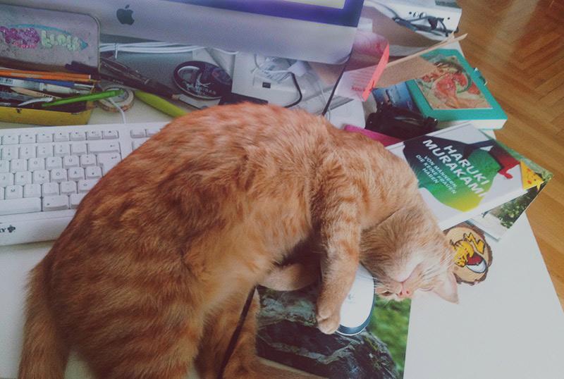 KuneCoco • Schnurrberts Jubiläum • Katze auf dem Schreibtisch