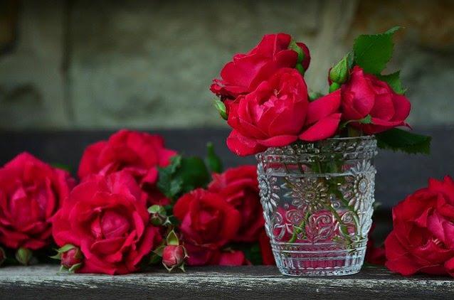 gambar bunga mawar merah cantik