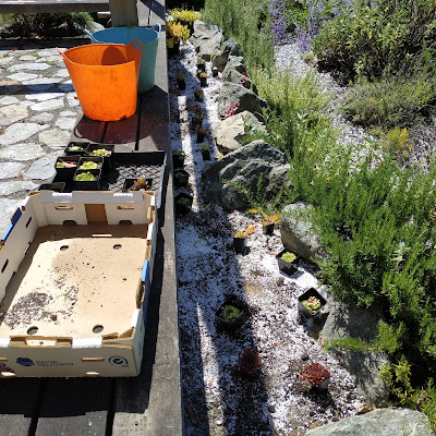 planting and watering new plantings