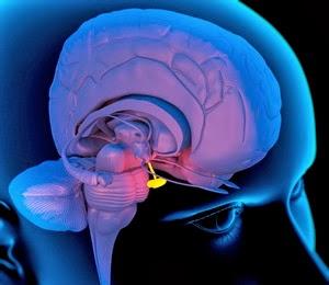 Kelenjar pituitari