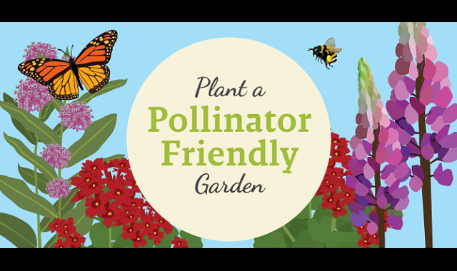 Plant a Pollinator-Friendly Garden