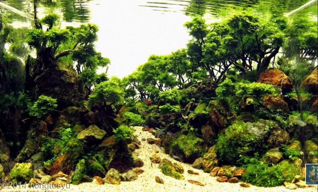Chắc chắn bạn có thể dùng lũa xương trong bố cục hồ thủy sinh rừng này