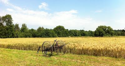 Reifes Getreide mit alter Maschine davor