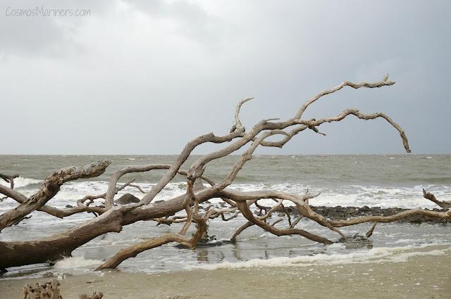 A Hauntingly Beautiful Spot at the Edge of the World: Driftwood Beach, Jekyll Island, Georgia | CosmosMariners.com