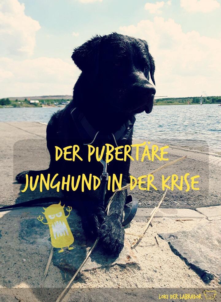 Schwarzer Hund am See