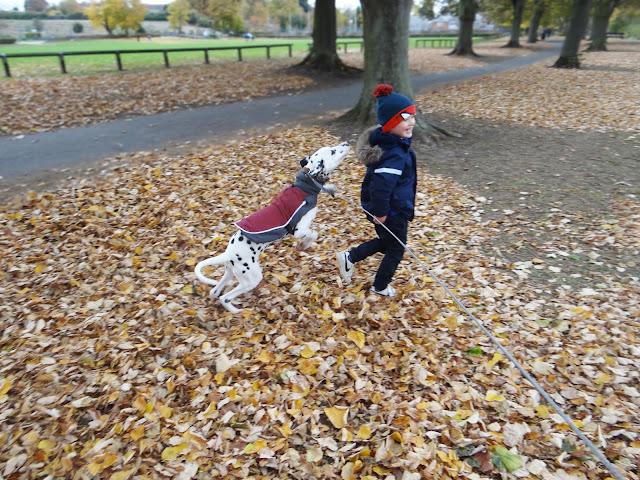 Dalmatian Puppy in Autumn