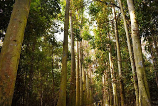 Lawachara forest