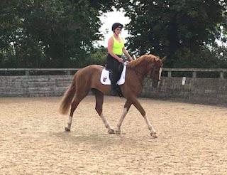 SMART Saddles Ambassador