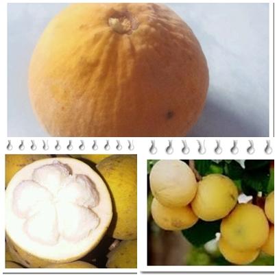 manfaat buah kecapi untuk kesehatan