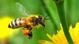 world-honeybee-day-celebrated