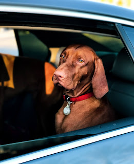 GPS dogs