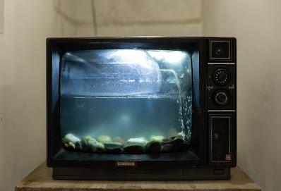 Televisi Akuarium