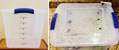 DIY quarantine tank for new aquarium fish using a clear plastic Sterlite tote storage box