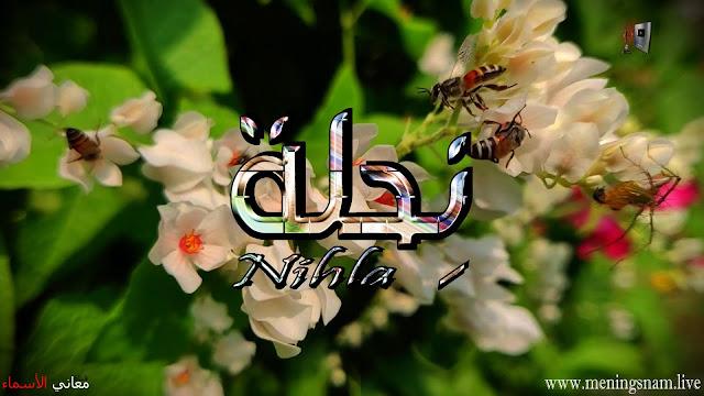 معنى اسم نحلة وصفات حاملة هذا الاسم Nihla