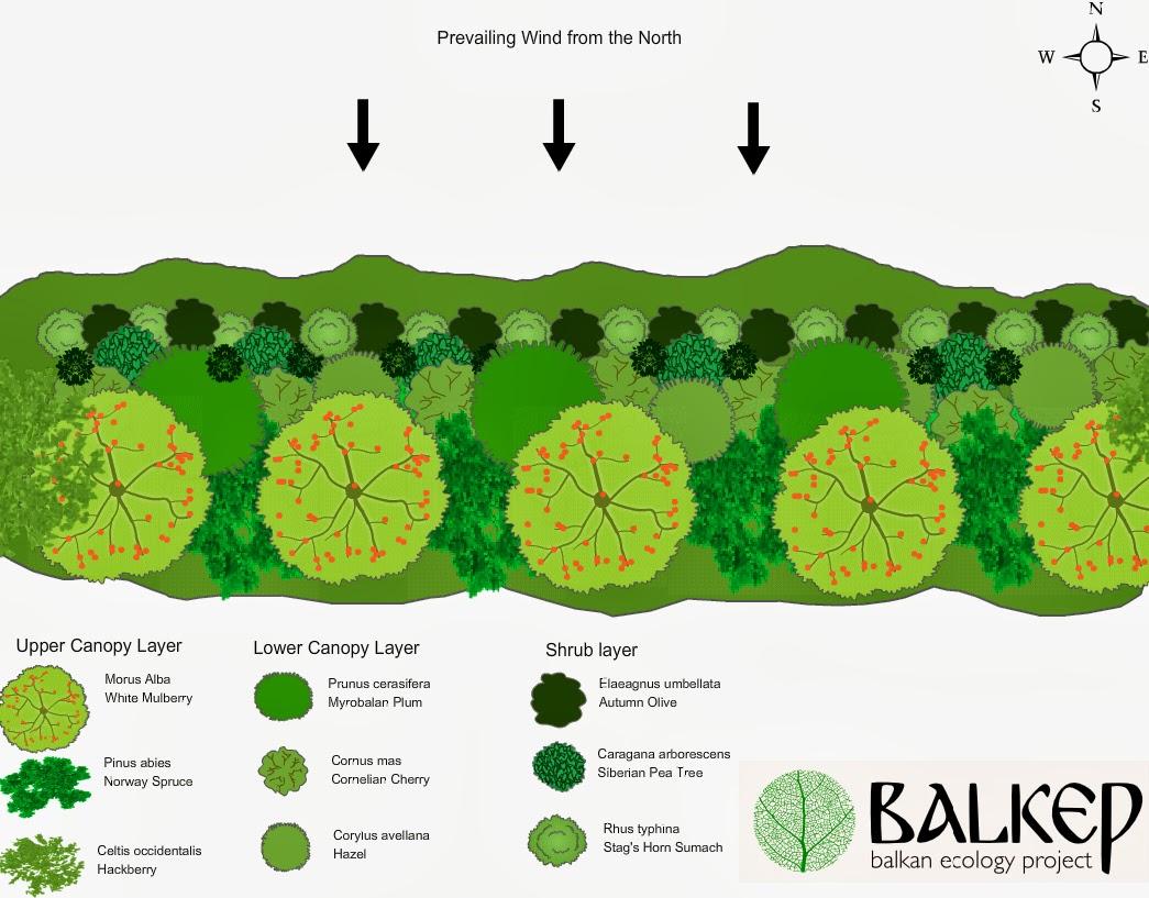 Balkan ecology project windbreak shelterbelt design for Garden windbreak designs