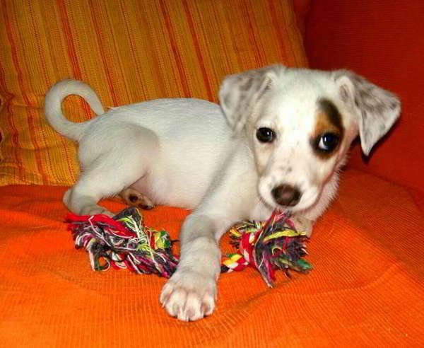 cachorro cruce bodeguero