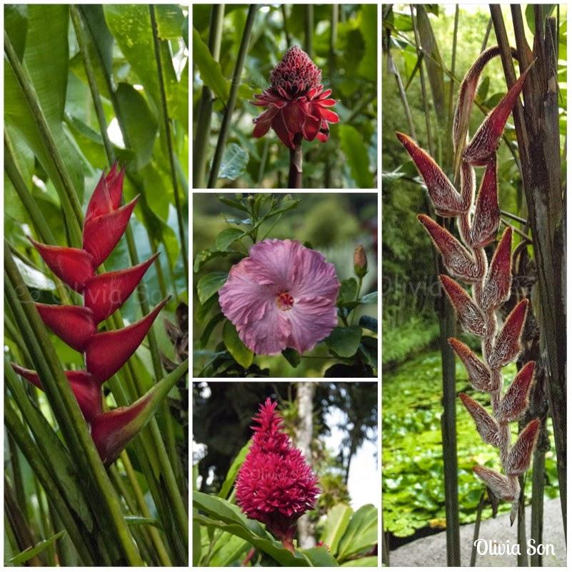 Balata fleurs