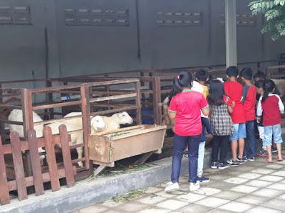 wisata edukasi mengenal binatang ternak
