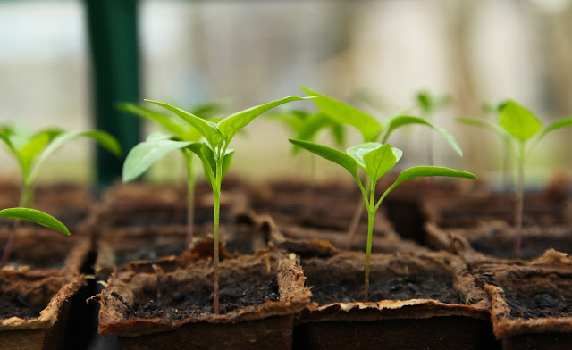 """Alt =""""Planting with seeds"""""""