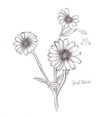 pencil drawing daisy petals blowing away in wind