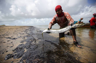 http://vnoticia.com.br/noticia/4168-amostras-de-peixe-apresentam-niveis-de-contaminacao-por-oleo-no-nordeste