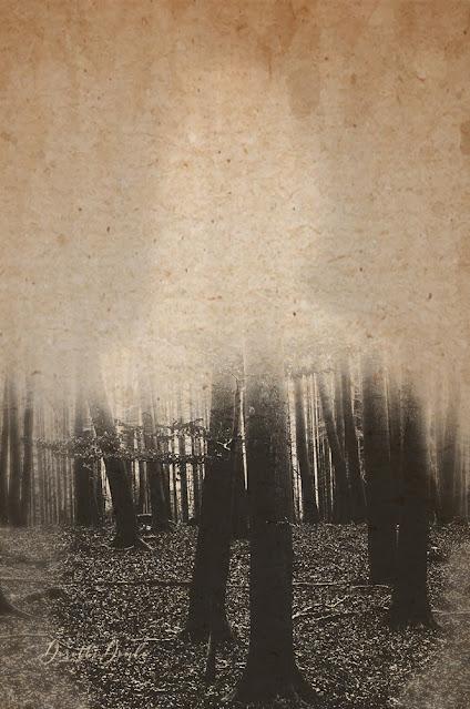 Winterbäume, trees, textureblended, Kunst, art, photoart, abstract, abstractart, Dorothe Domke, gestische Fotografie
