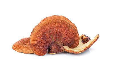 Reishi mushroom farming training