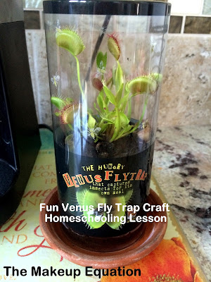 Venus Fly Trap Craft Lesson