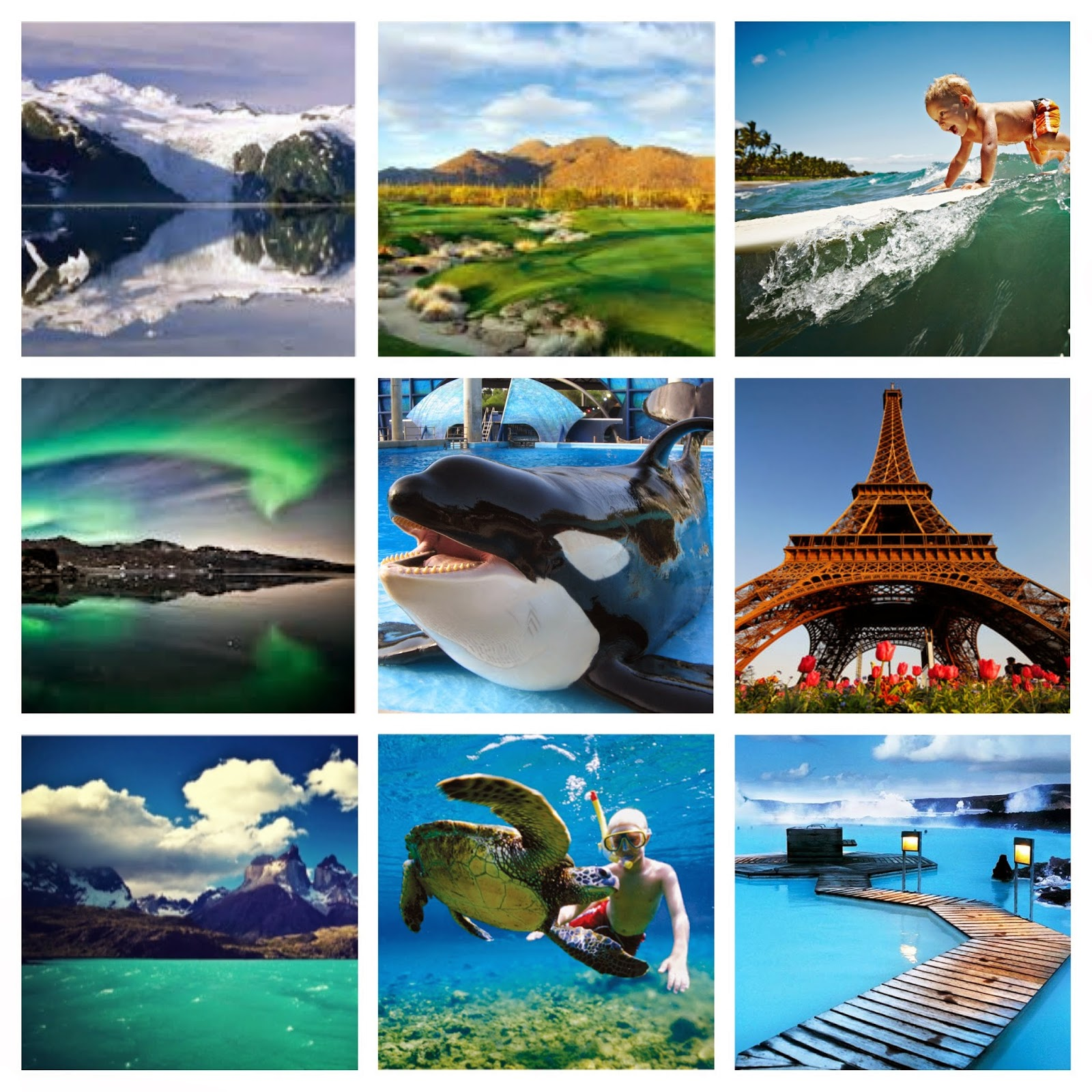 Collage Of Beautiful Locations, Animals, and Aquatic Activities