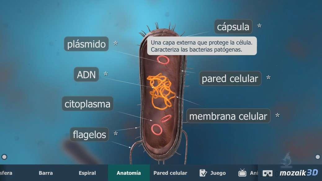 Bacteria Interactiva 3D para Android