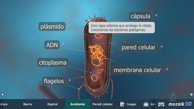 partes de la bacteria modelo 3d de célula procariota