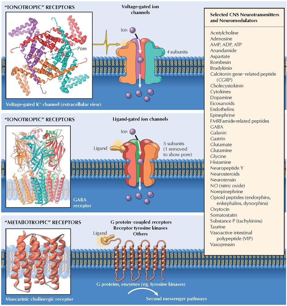 Central Nervous System Neurotransmitters, Receptors, and Drug Targets