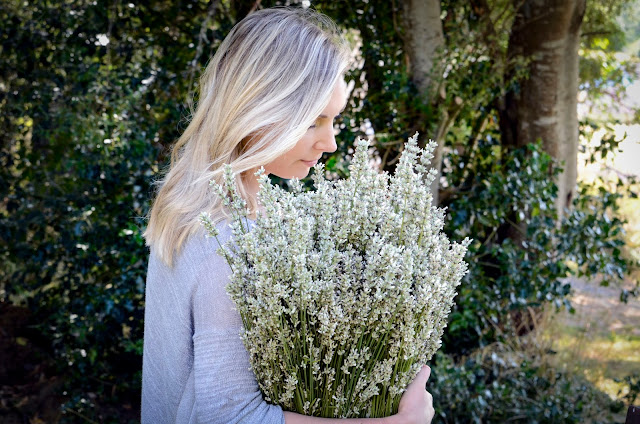 White Lavender Plants for those who don't like purple