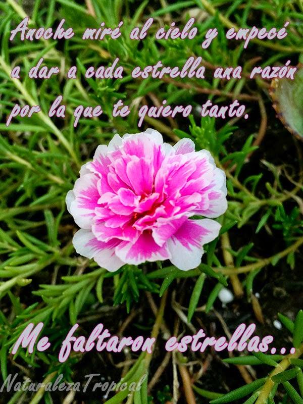 Postal de amor con bella flor diez del dia de fondo