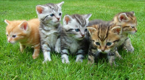 Perhitungan Waktu Lama Kucing Mengandung Beserta
