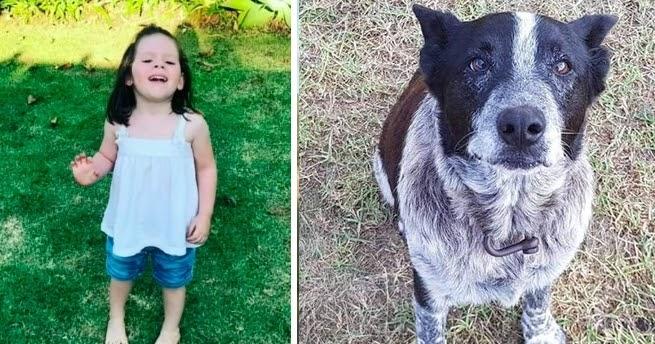 Missing Girl Kept Safe By Blind, Deaf Senior Dog