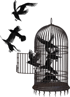 Crows in a cage