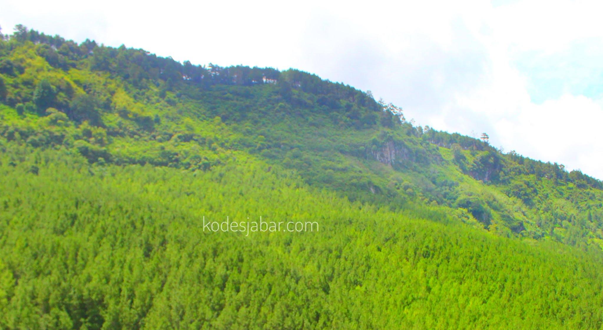 Hutan Pinus Culamega
