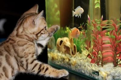 Cat and Fish Cat Proof Fish Tank Cat Proof Aquarium