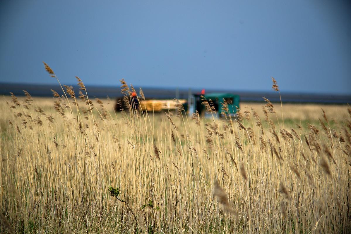 #278 Carenar Auto Zoom f4.5 85-210mm – Urlaub in Cuxhaven Duhnen (8)