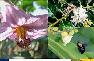Palestra sobre abelhas e sua importância para o  meio ambiente será terça 15/10 , no Espaço Cultural