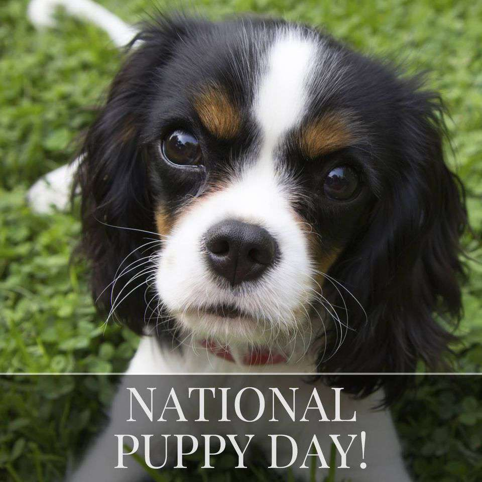 National Puppy Day Wishes Photos