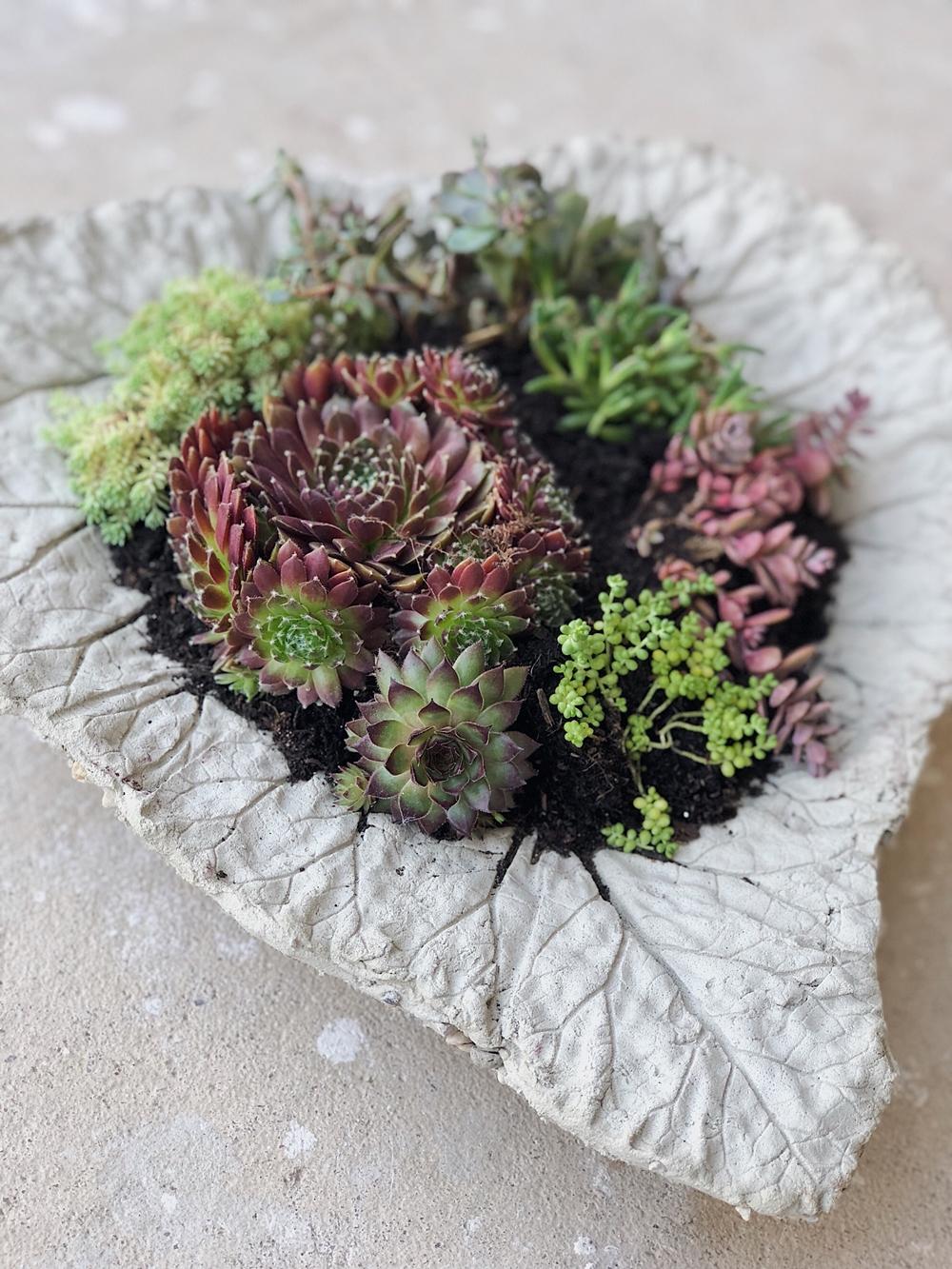 Diy Beton Pflanzschalen Aus Rhabarberblättern Für Den Garten